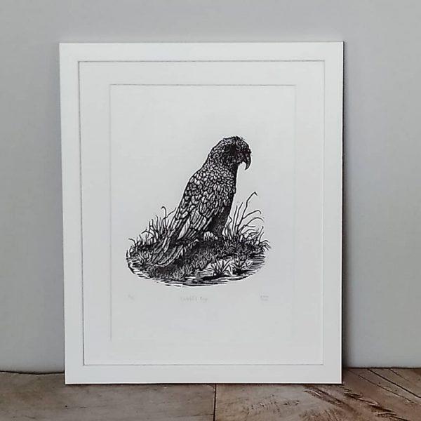 New Zealand Kea Artwork Margaret White Art Watchful Eye